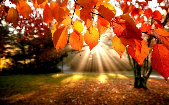fall-foliage-wallpaper1